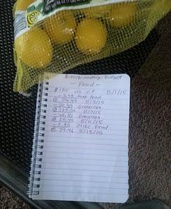 When life throws you lemons, make a budget